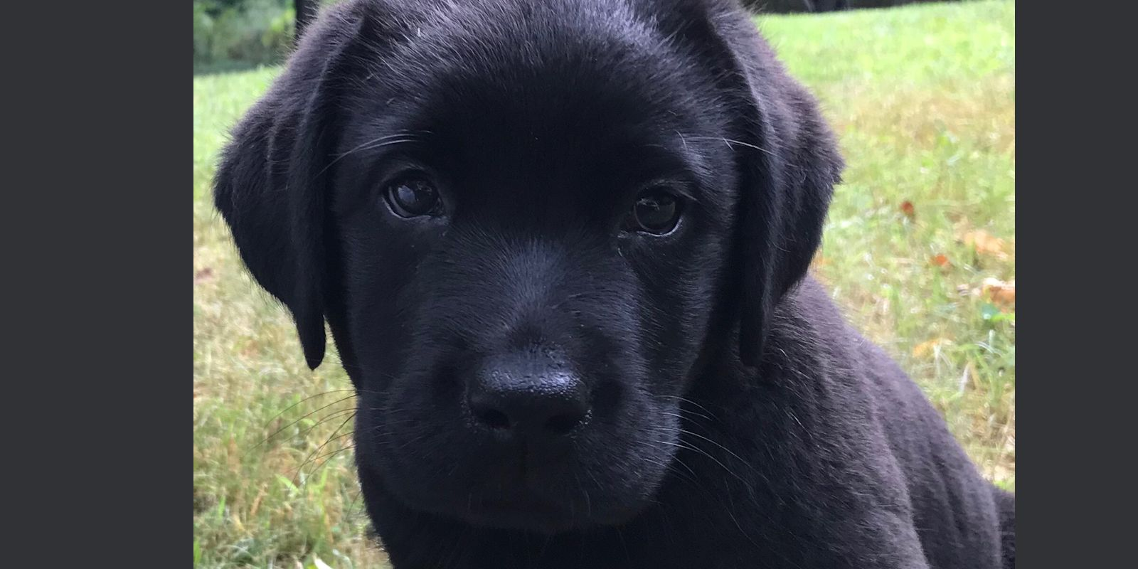 Puppy Kindergarten Training NJ