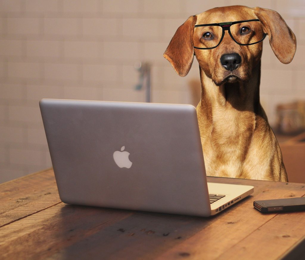 Online dog obedience training